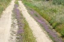 Caminos florecidos